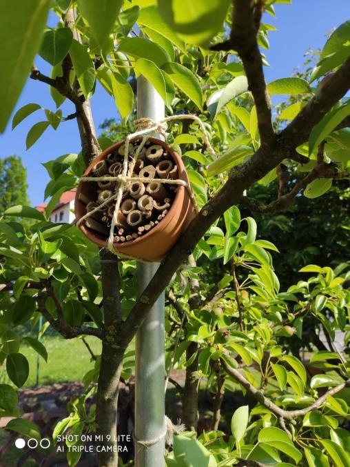 Bienenhotel- Bau im Onlineunterricht