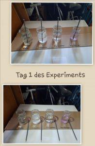 Chemie im Homeschooling